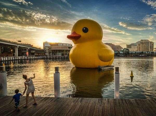 Gargantuan Rubber Ducks