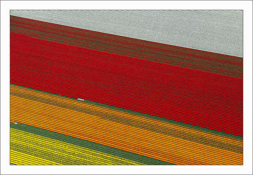 Colorful Aerial Tulip Photography