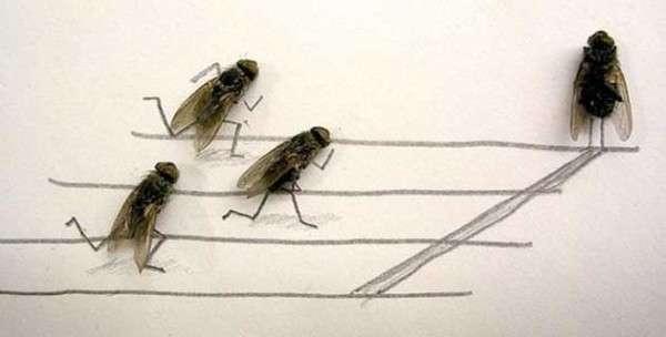 Amusingly Morbid Fly Art