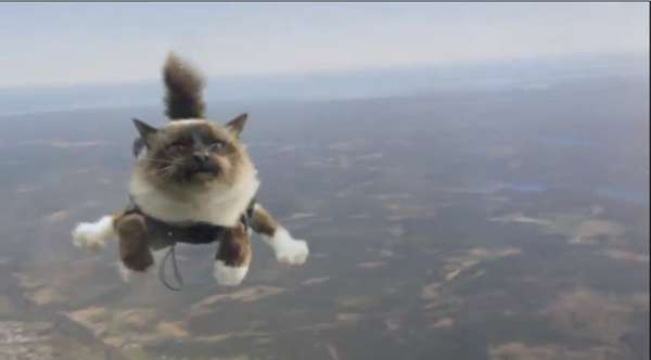 Parachuting Cat Commercials