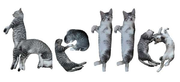 Playful Cat Typography