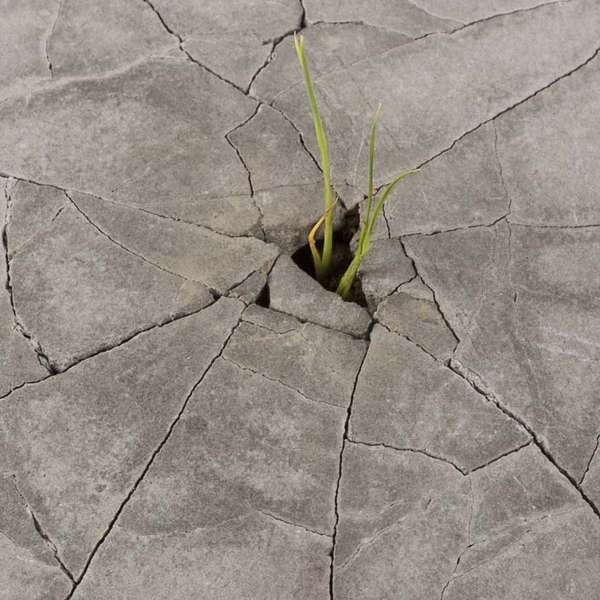 Cracked Footpath Planters