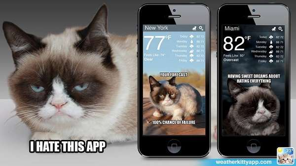 Feline Weather Forecast Apps
