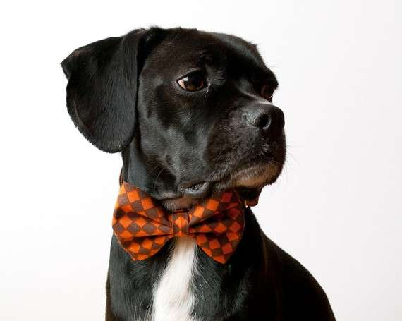 Formal Dog Fashion