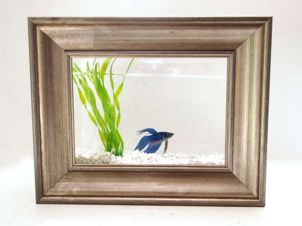 framed fish tank