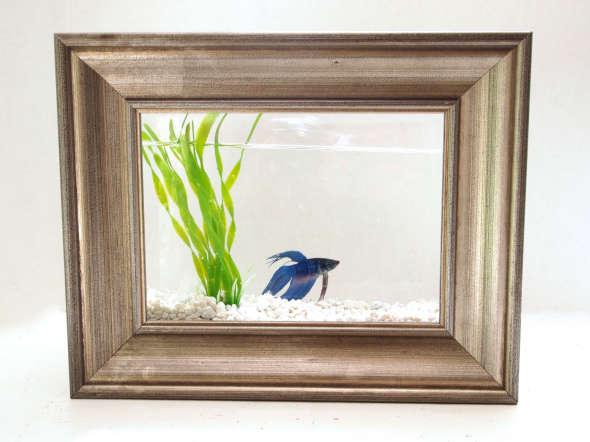 Fantastically Framed Fish Tanks