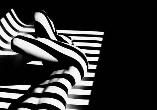 Animalistic Shadowed Photography