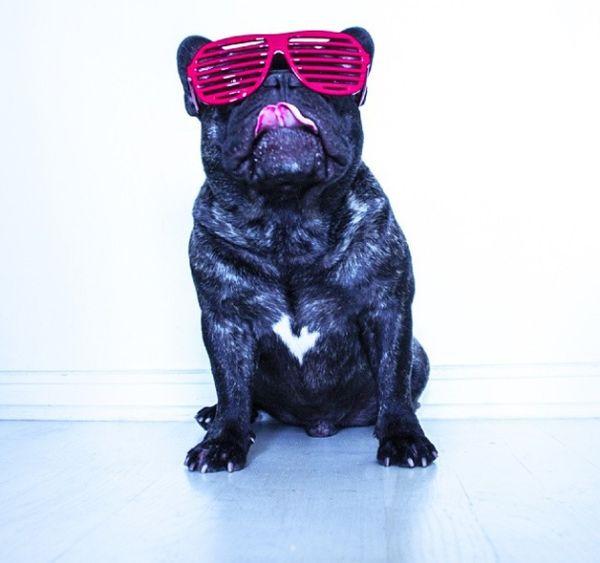Viral Canine Photo Accounts