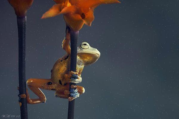 Artistic Amphibian Photography