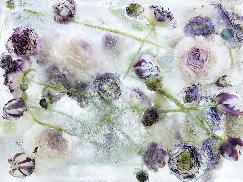 Icy Botanical Artwork