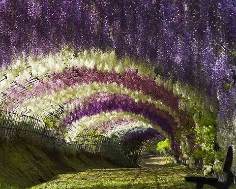 Fairytale Flower Tunnels