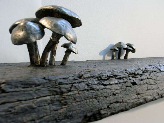 Fungus Shelves