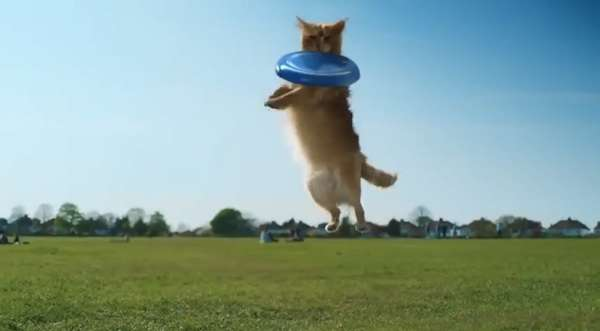 Dog Behavior Cat Ads
