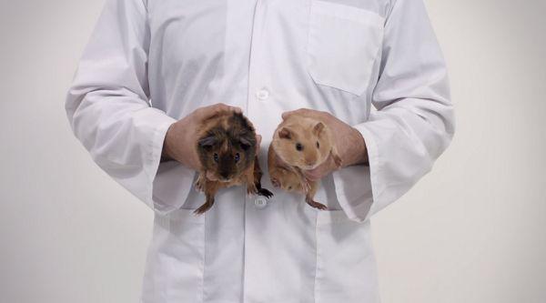 Cute Testicular Cancer Campaigns