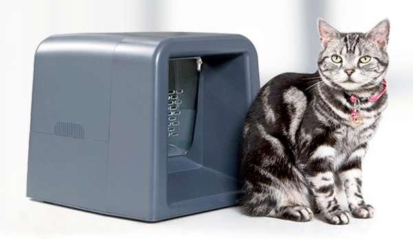 Sensory Feline Dining