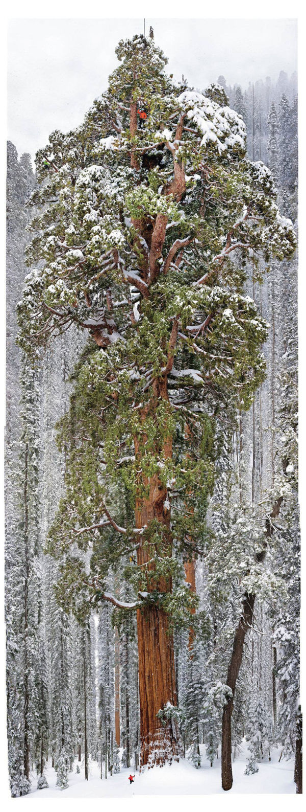 Ancient Tree Photography