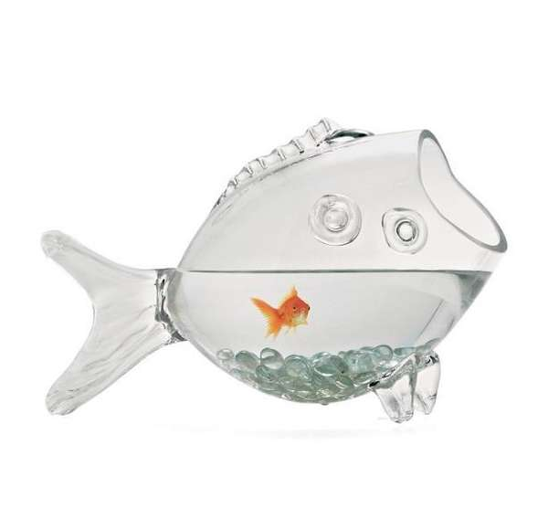 huge glass fish bowl collectors weekly