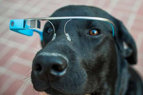 Tech Infused Pet Glasses Google Glass For Dogs