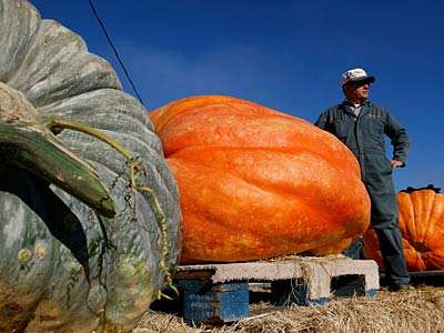 The Danger of Giant Pumpkins