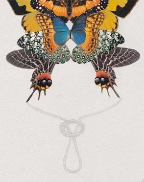 Knotted Butterflies
