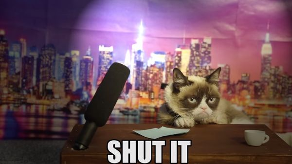 Miserable Feline Host Auditions : Grumpy Cat Late Night