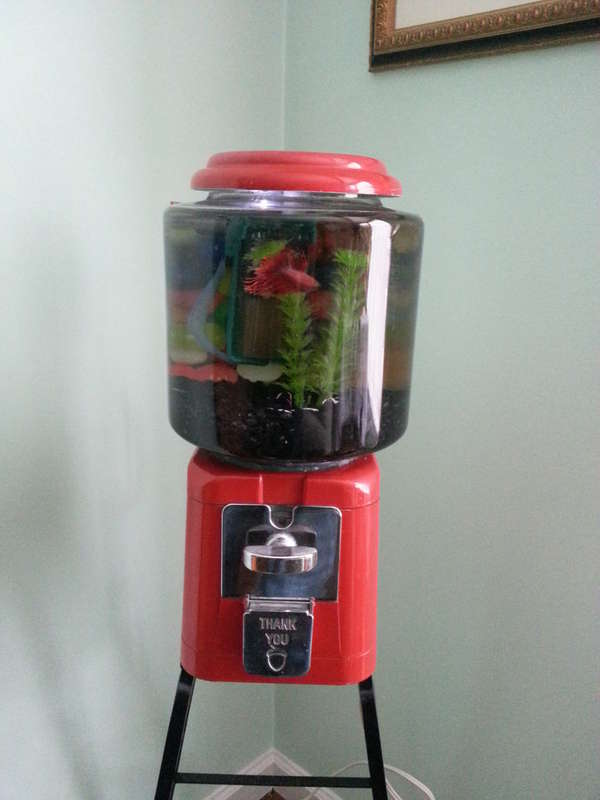 Candy Dispenser Aquariums