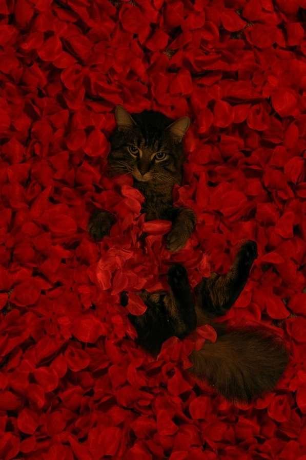 Feline Film Recreations