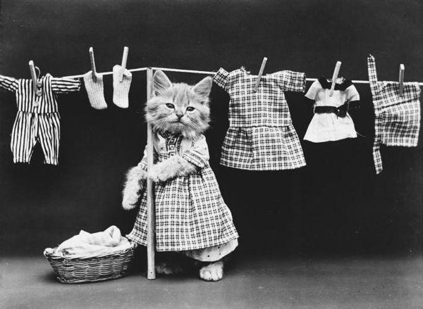Ancestral Feline Photography