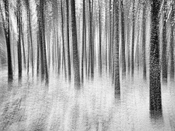 Fading Forest Photography