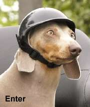 Helmets for Pets