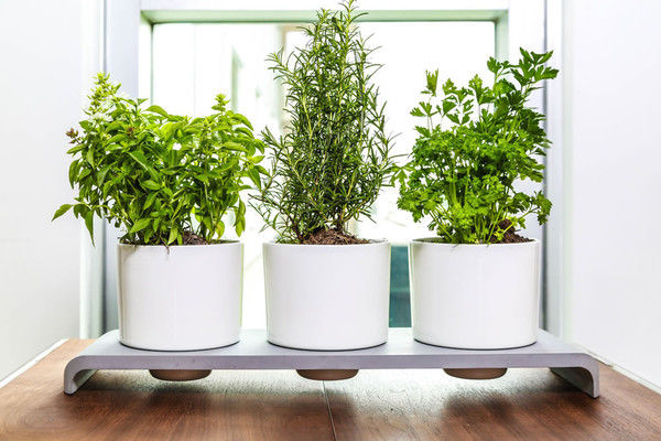 Self Watering Herb Pots Herb Pots