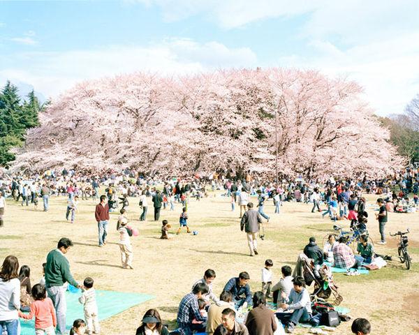 Leisurely Japanese Photography