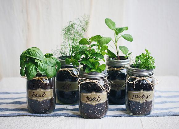 Diy Mason Jar Gardens Home Herb Garden