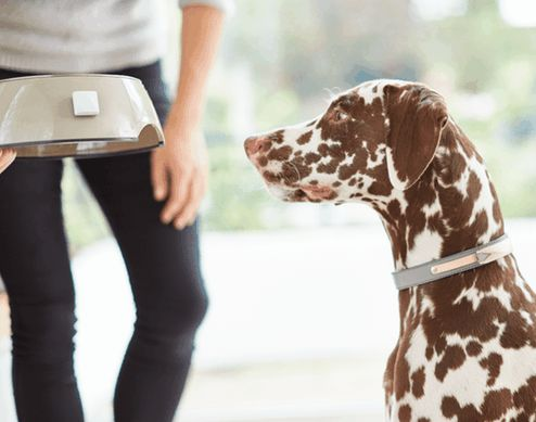 Pet-Monitoring Home Systems