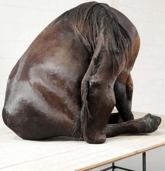 Distorted Equine Sculptures
