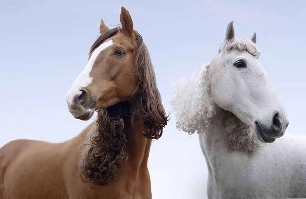 Equestrian Perms