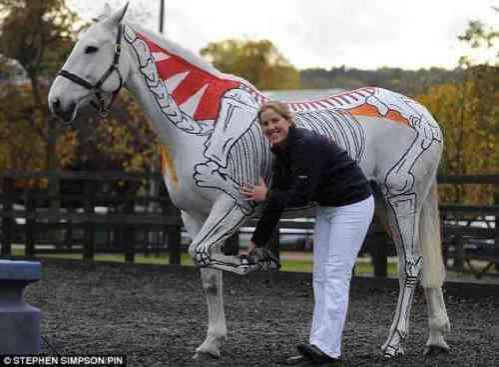 Halloween Horses