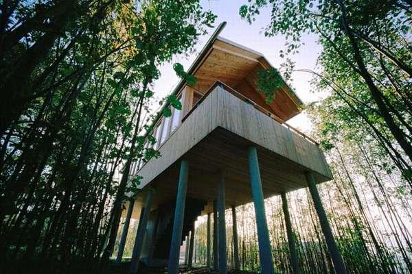 Treetop Suites