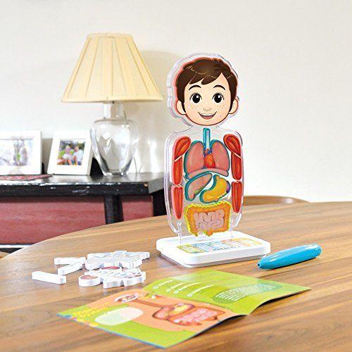 Smart Anatomy Toys