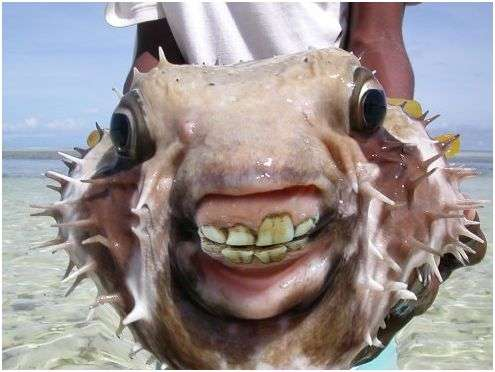 Freaky Fish Photomentaries : fish with human features