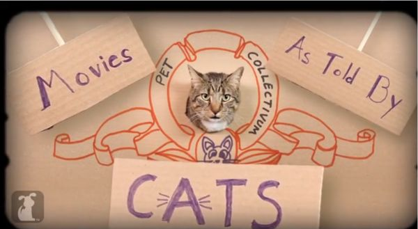Feline Interpreted Dystopian Films
