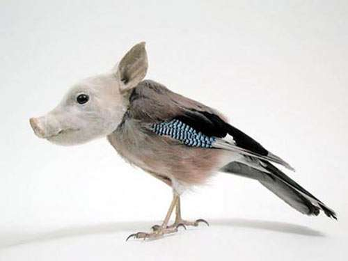 Hybrid Taxidermy