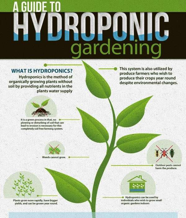 Hydroponic Gardening Guides