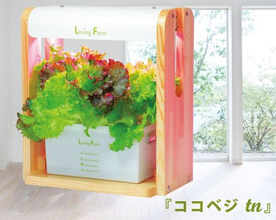 Smart Salad-Growing Gardens