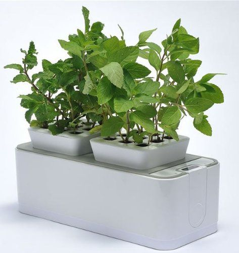 Self Watering Indoor Gardens Hydroponics System