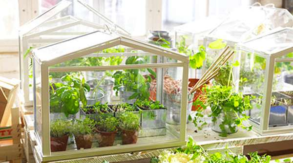 Ikea Mini-Greenhouses