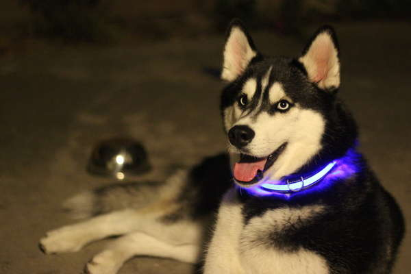 Light-Up Neon Dog Collars