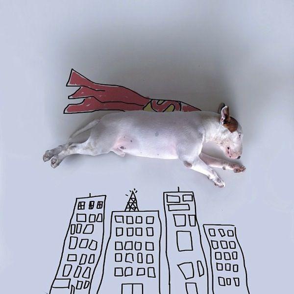 Illustrated Dog Portraits