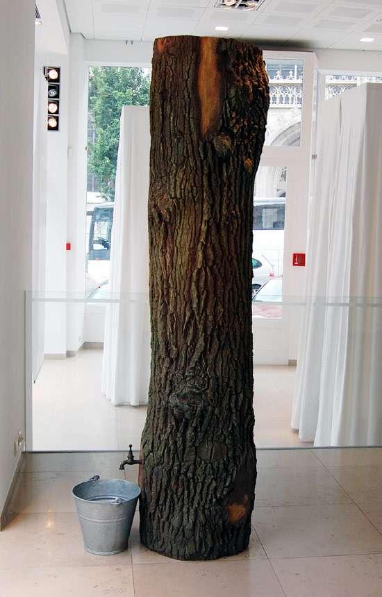 Indoor Tree Trunks