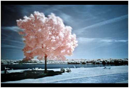 Insane Infrared Images
